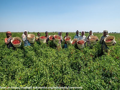 organic-farmer-organic-growers-1
