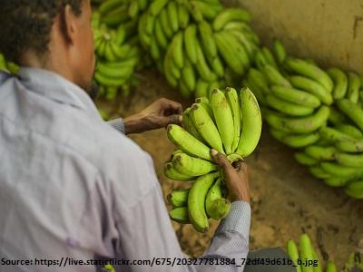 banana-worker