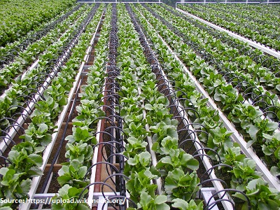horticulture-1